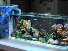 Murah Meriah, Ini Inspirasi Hiasan Aquarium Cantik dan Modern!